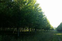 Large Trees Available - Many Varieties